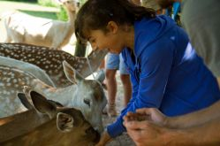 Parc animalier de Ste Croix